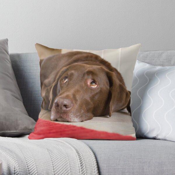Chocolate Labrador Throw Pillow