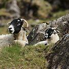 Sheepies by Gillen