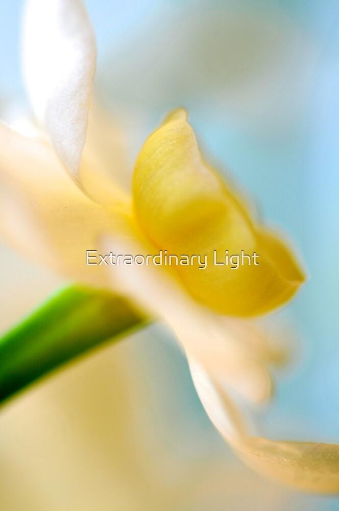 Daffodil by Renee Hubbard Fine Art Photography