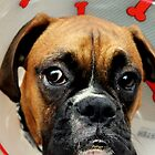 Not Happy - Boxer Dog Series by Evita
