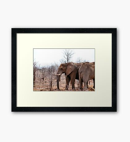 THE AFRICAN ELEPHANT – Loxodonta Africana - IN PROFILE, REAR AND FRONT! Framed Print