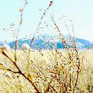 Sierra Vista by Evgenia Attia