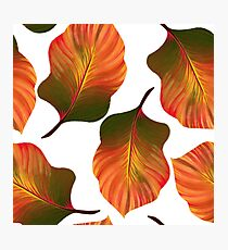 Tropical Leaves in Orange Photographic Print