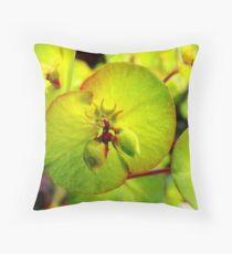 Euphorbia Dekokissen