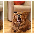 The mighty yawn by Sangeeta
