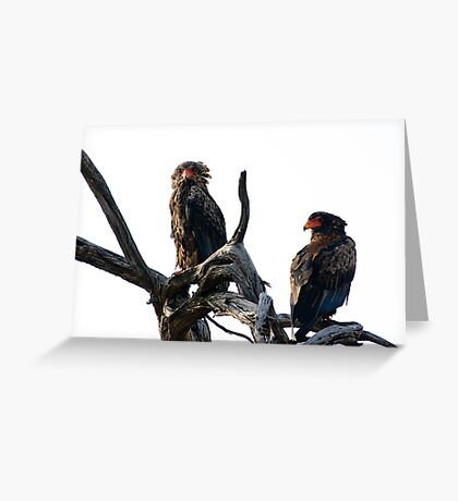 Bateleur Eagles Greeting Card