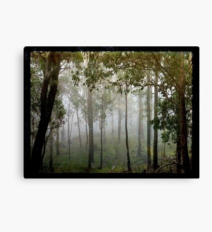 Eucalypts in the Mist Canvas Print