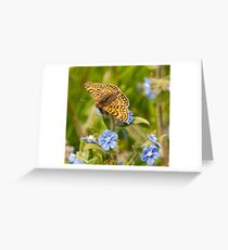 Glanville Fritillary Greeting Card