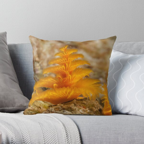 Christmas Tree Worm, Kimbe Bay, New Britain, Papua New Guinea. Throw Pillow