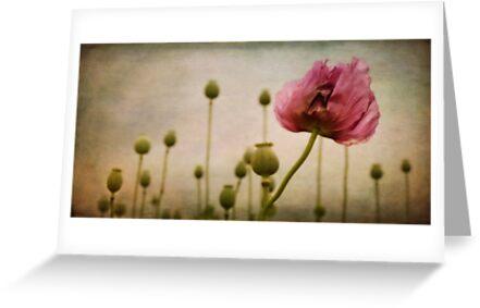 Depth of (Poppy-) Field by Priska Wettstein