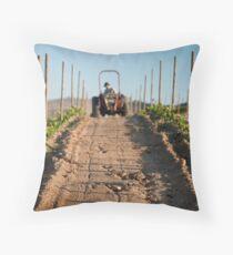 Growing vineyard at sunset Dekokissen