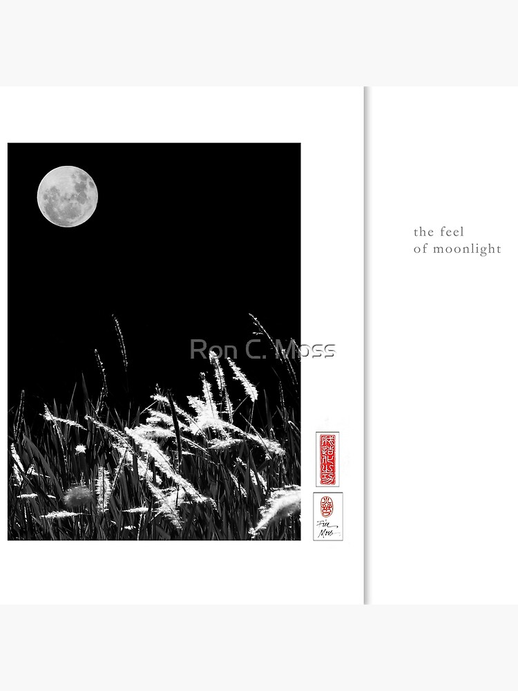 Mindfulness In Monochrome - Moonlight by ronmoss