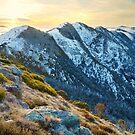 Cross Cut Saw, Mt Howitt, Alpine National Park, Victoria, Australia by Michael Boniwell