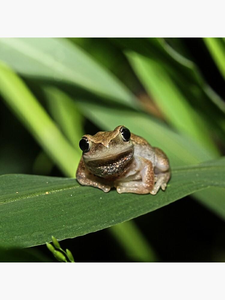 Hello Frog by theoddshot