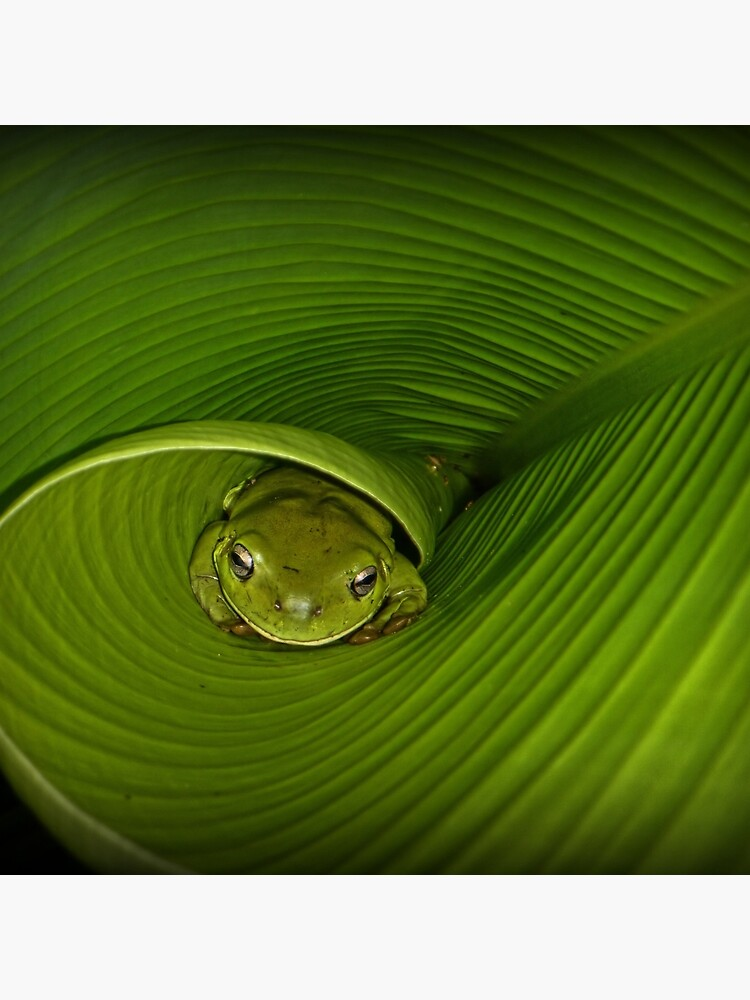 Frog in banana leaf by theoddshot