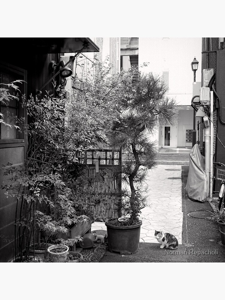 Ginza alley cat - Japan by keystone