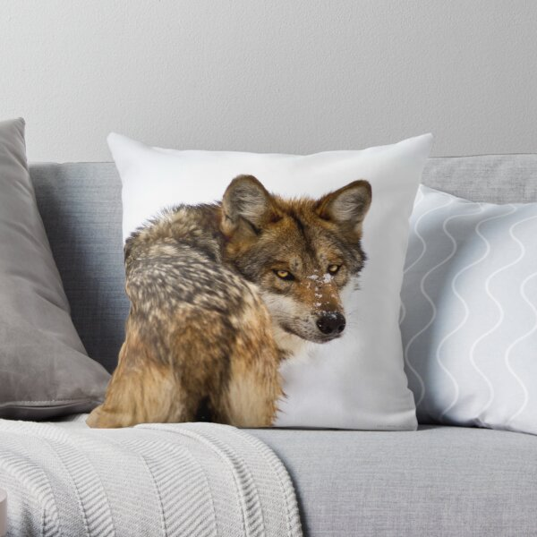 Mexican Gray Wolf ( 2 of 3 ) Throw Pillow