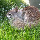 crazy squirrel II by Jimmy Joe