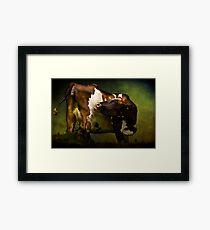Cows Bum Framed Print