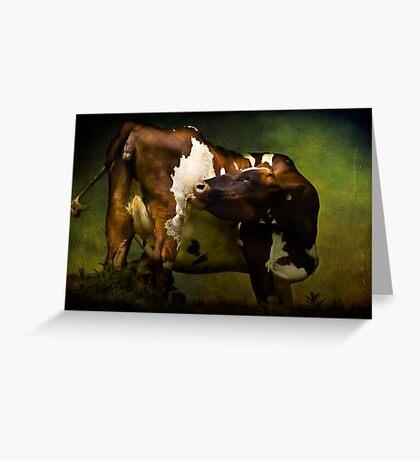 Cows Bum Greeting Card