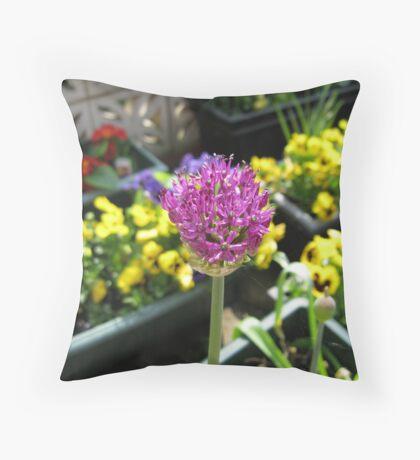 Beauty Unfolding - Allium and Pansies  Kissen