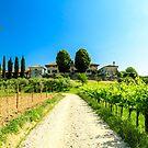 Die Felder von Friaul-Julisch Venetien werden mit Weinreben bewirtschaftet von zakaz86