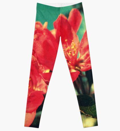Retro Blossom Leggings
