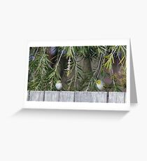 Two Silvereye Greeting Card