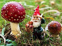 Gnome picking 'shrooms - my garden  by Bev Pascoe