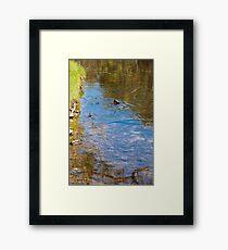 Downward Duck in Swirly Waters Framed Print