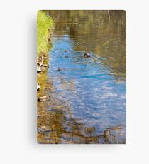Downward Duck in Swirly Waters Metal Print