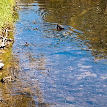 Downward Duck in Swirly Waters by decoaddict