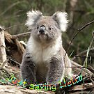 Koala saying Hello by Bev Pascoe