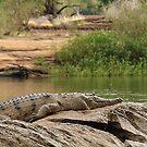 Croc on a rock by georgieboy98