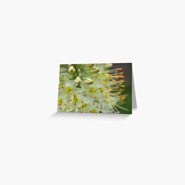 Hershey Rose Garden #3 Greeting Card
