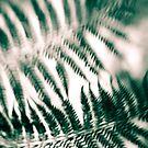 ferns by Andrew Bradsworth