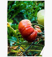 tomato tomato Poster