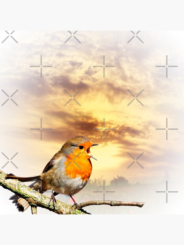 Robin At Sunset  by IanJeffrey