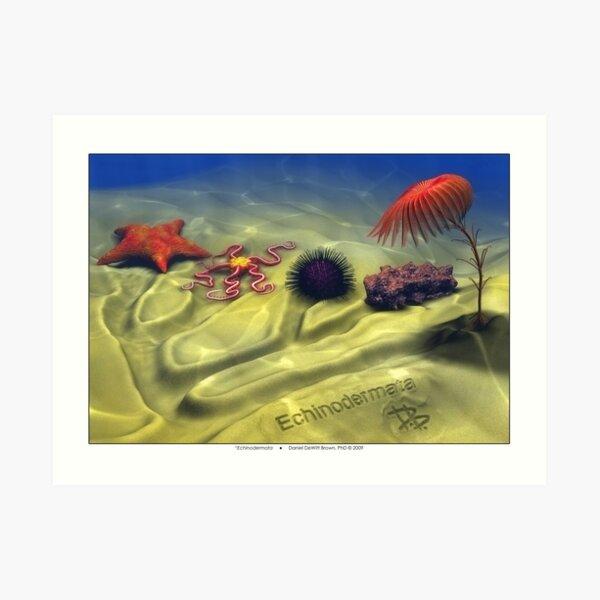 Echinodermata Art Print