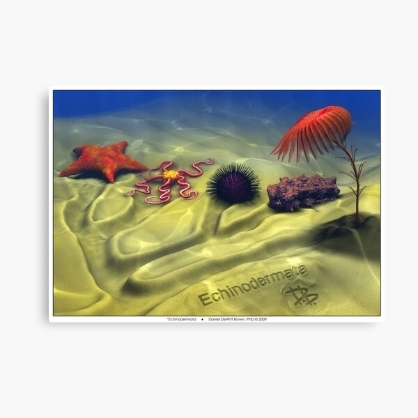 Echinodermata Canvas Print