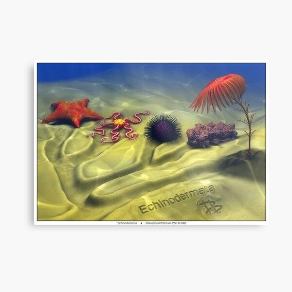 Echinodermata Metal Print