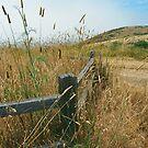 Fenceline Along the Trail by Nancy Stafford
