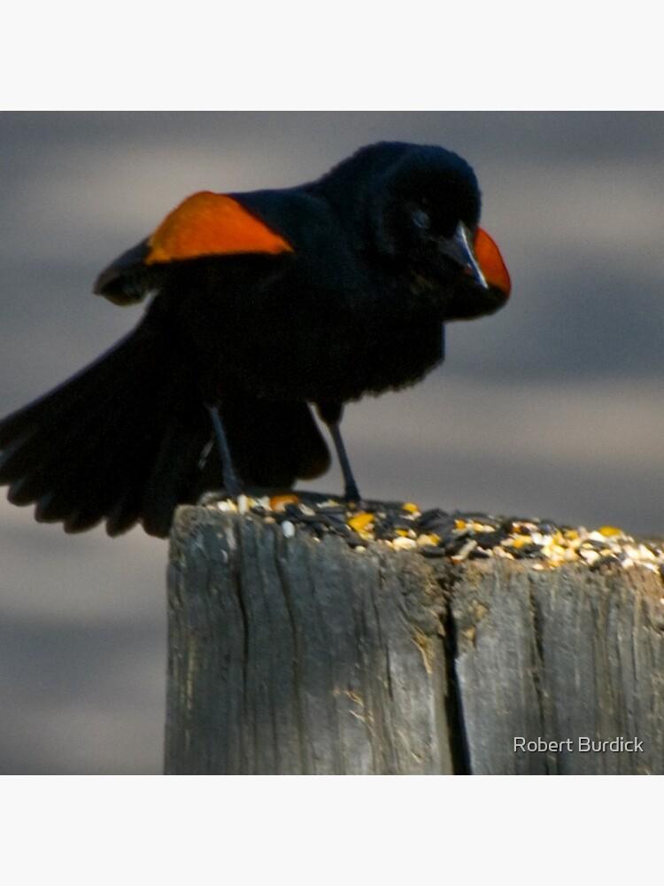 Red Winged Blackbird von DeeTwoXcess