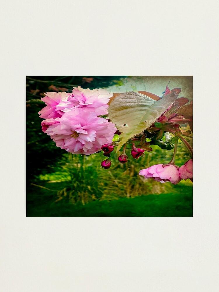 Alternate view of Springtime Photographic Print