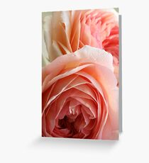 Apricot Roses Greeting Card