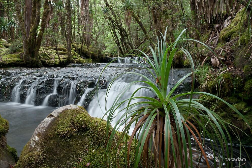 Cephissus Falls, Pine Valley, Tasmania by tasadam