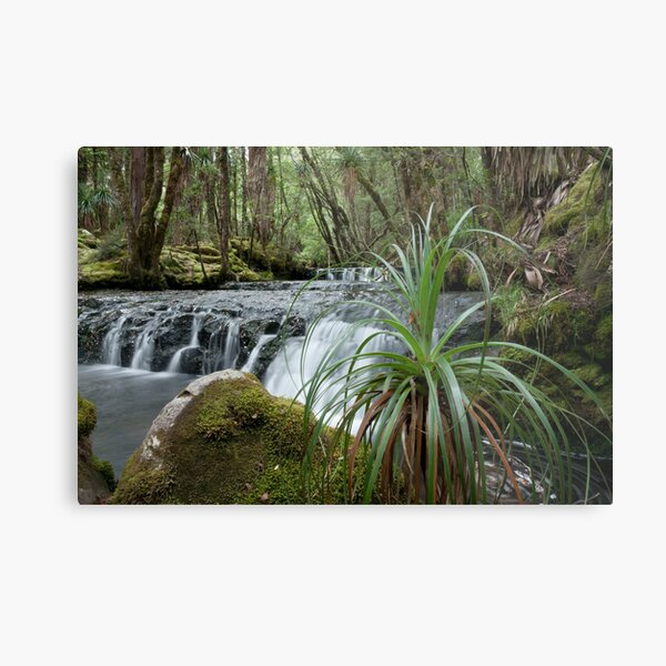 Cephissus Falls, Pine Valley, Tasmania Metal Print