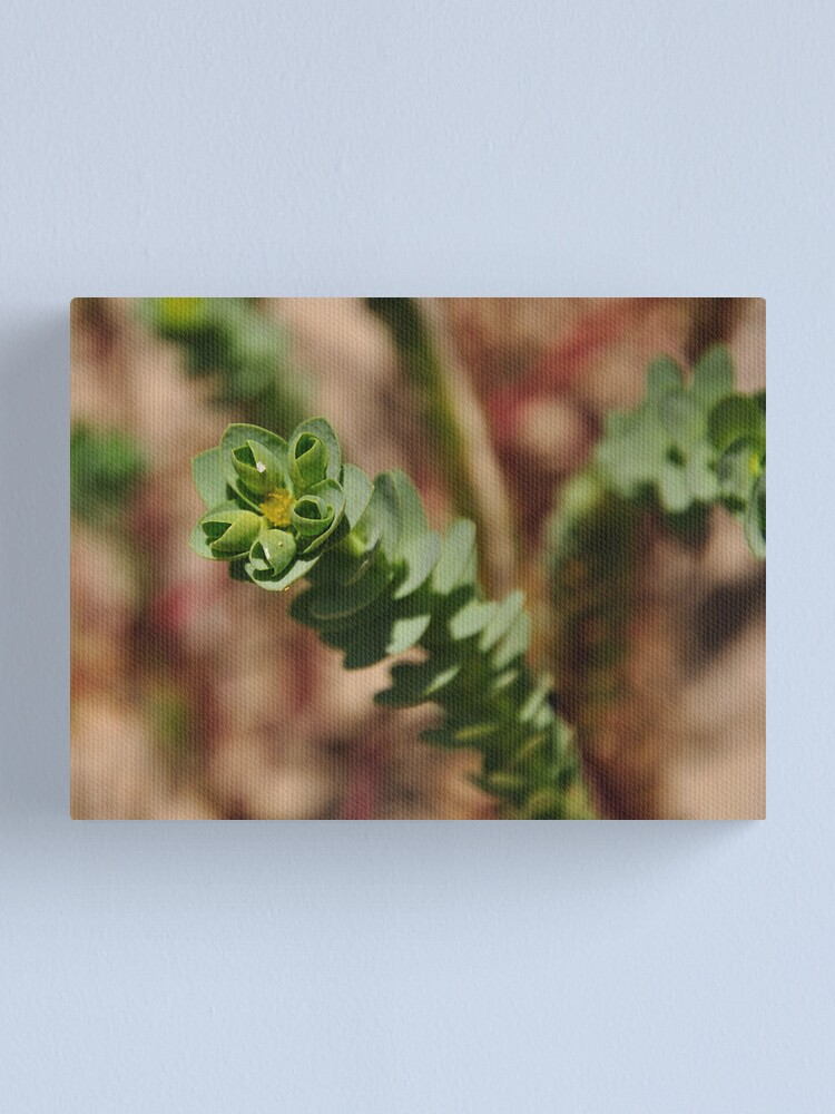 Alternate view of Sea Spurge Canvas Print