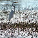 wetlands : Florida Everglades ..slow black death awaits  by Elizabeth Rodriguez