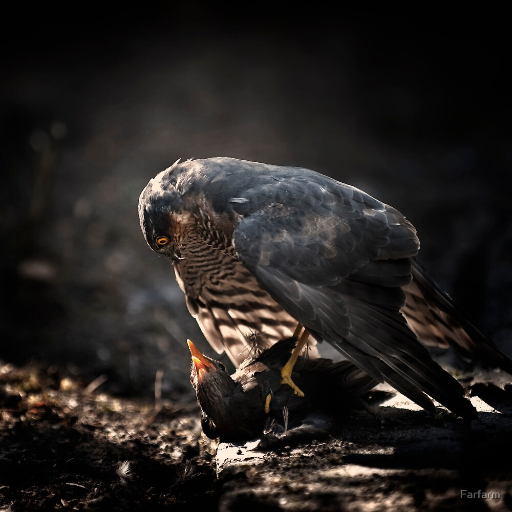 Life & Death in my backyard by Farfarm